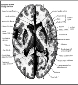 پاورپوینت توضیحی در زمینه دستگاه عصبی